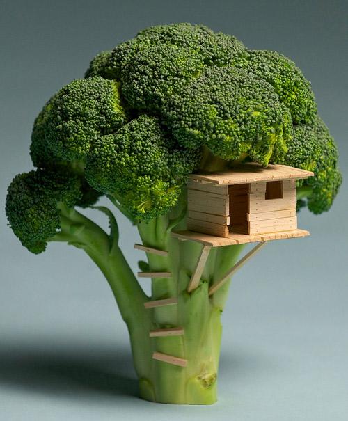Habitats alternatifs, cabanes et huttes - Page 5 Cabane-brocolis