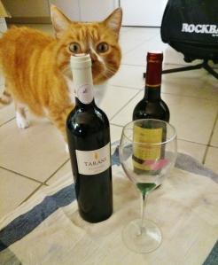 Tarani-Cat