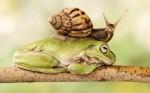 froggy-escargot