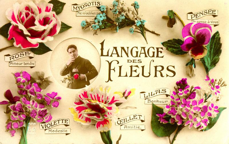 Langage des fleurs attention aux risques parfois toxique for Langage des fleurs