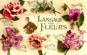 langage-des-fleurs