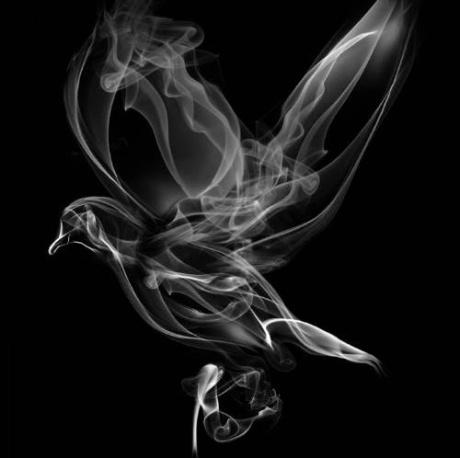 colombe-fumée
