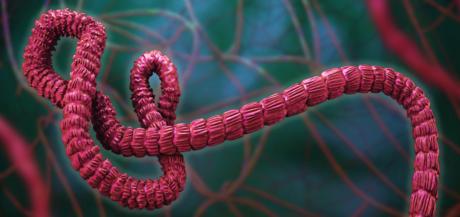 ebola-3d-950-528