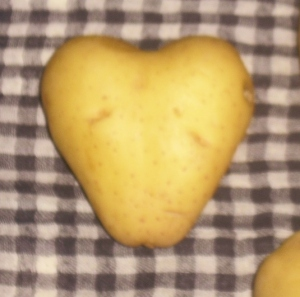 Pomme-Amour