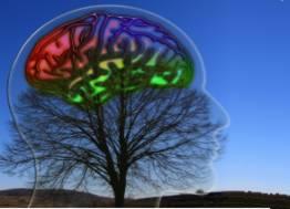 cerebro-arbol1