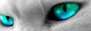 Ces-yeux-là