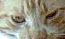 Ces-yeux-là2