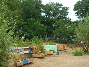 jardin-partagé3-P.Lafraise