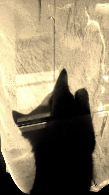Ciao,Shadow Cat