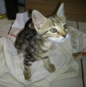 Cat Marx 1