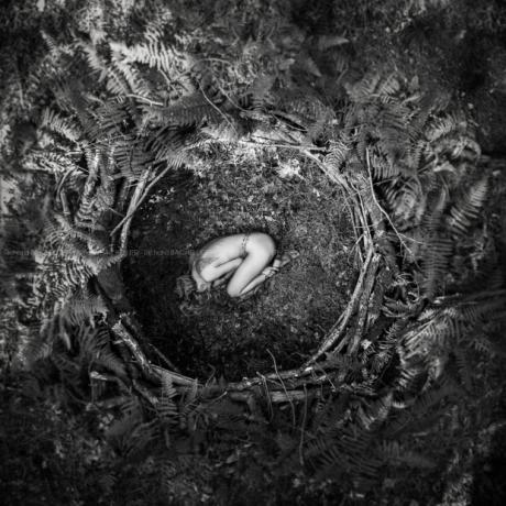 le-nid--renaissance-by-richard-bachellier